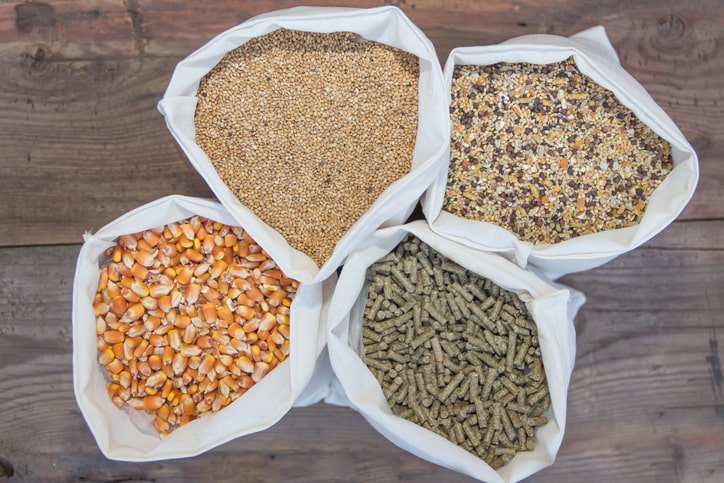 types of chicken feed
