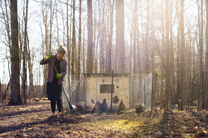 woman raking leaves next to chicken coop