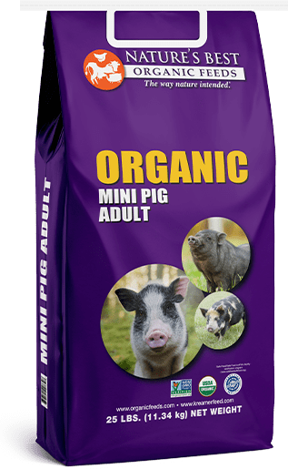 organic adult mini pig feed